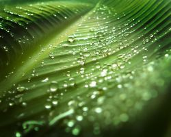drops on green IV WP by MarcosRodriguez