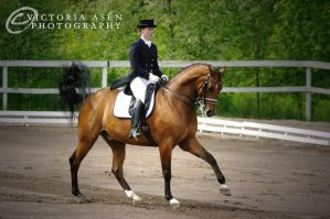 Dressage by Breezfully