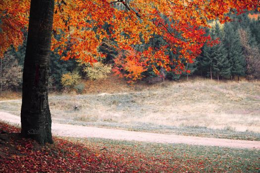 A piece of autumn II by valiunic