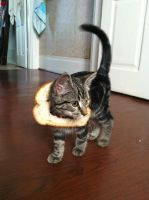 Trixie Cat Breading by NarcissusTattoos