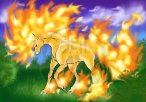 Rapidash by Sieberwolf