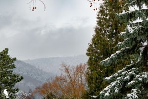 Ore Mountains by PhotoDragonBird