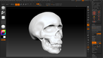 zBrush : Human Skull (Practice | Video) by w0lfix