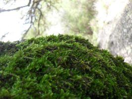 moss on tree 1 by ZedLord-Art