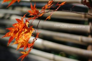 Autumn Leaves by RuckMonkeyPhotos