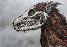 the skull redfox postcard by Hveits