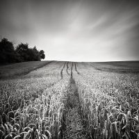 In The Fields V by EmilStojek