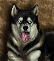 Husky Portraits by Demonic-Pokeyfruit