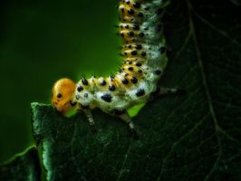 Caterpillar by Serdar-T