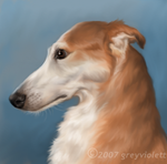 Sighthound in Profile revised by greyviolett