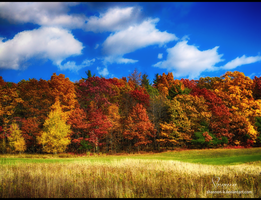 Fall Foliage by Shannon-K