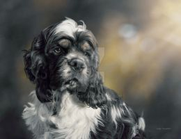 American Cocker puppy by CindysArt
