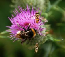 Busy Bees by AdrianDunk
