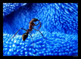Ant with the blues by mercyop
