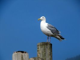 Seabird 3 -- Sept 2009 by pricecw-stock