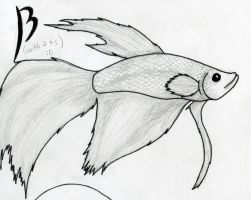 Betta Fish by Up-Your-Arsenal-N90