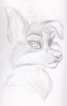 Female Furry/Dog Sketch by BenRusk