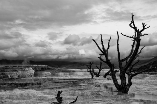 Mammoth Hot Springs by amhaley