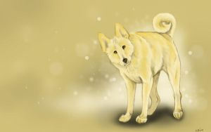 Canaan Dog Wallpaper by Puppy-Chow