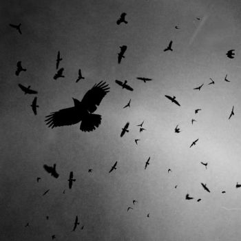 Crow Nation by intao