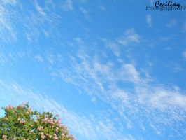 a bright day by ceciliay