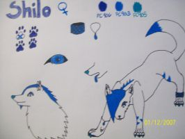 New character ref sheet: Shilo by Shadowdannie