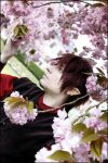cherry blossoms by Terion-d-Arien