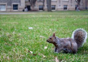 Arts Quad Squirrel by 4everN3rdy