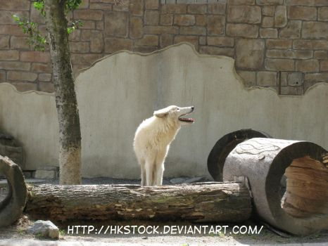 Wolf Howl by HKstock