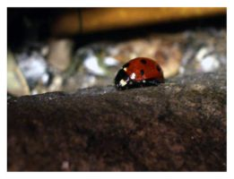 lady bug between the cracks by invasionsfaithfull
