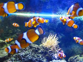 Clown Fish Heaven by VorpalBeast
