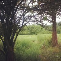 TREES :D by LunaPicture