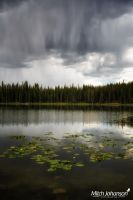 Blanket of Rain Over the Lily's by mjohanson