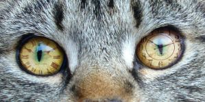 Cat O'Clock. by SteffiSTEREO