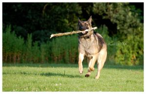 Big Stick by KonikPolski