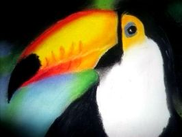 Toucan by pikels2