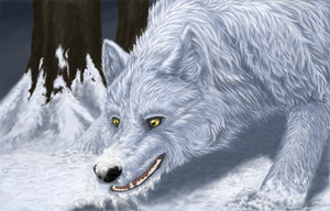 Winter wolf by Sukkamies