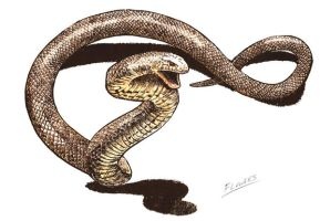 The Eastern Brown Snake by Snake-Artist