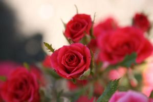 for you by Dueto-variavel