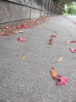 leaves of fall by deniedfromfreedom
