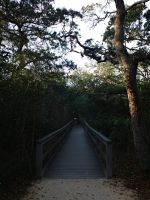 St. Augustine Nature Walk 14 by Spiritomb1231