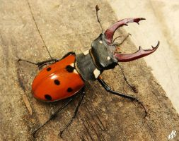 Lady Stag Beetle by Dwarf4r