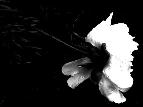 The Smell After Rain b+w by The-Defenestrator