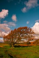 Northumberland Tree 4 by newcastlemale