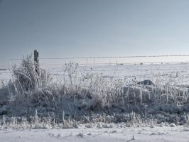 snowy fence 12 by fotophi