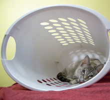 Laundry Cat by OnTheGanges