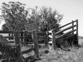 Cattle Ramp by southoffebruary