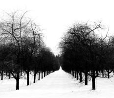 and also the trees by Linlith