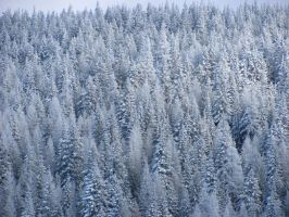 Snowy Trees by TeiaAlea