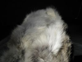 Rabbit Fur 41 by TRANS4MATICA